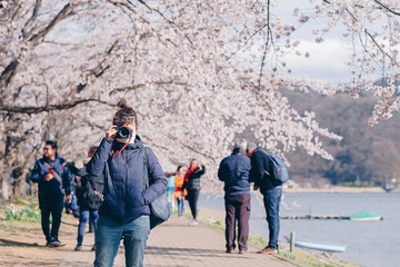 Happy Young Woman traveling with beautiful pink Cherry Blossom  at Kawaguchiko lake, Yamanashi. Spring Season. landmark and popular for tourist attractions in Japan