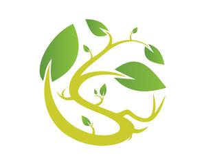 Leaf plant s 3