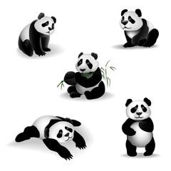 Cartoon Panda. Set of cartoon pandas on a white background. Vector illustration, 3D.
