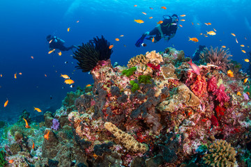 Fototapete - SCUBA divers exploring a tropical coral reef