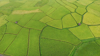 Wall Murals Air photo The beautiful landscape of rice fields in Thailand.