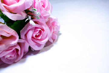 Pink roses on white background photoshoot. Valentine day