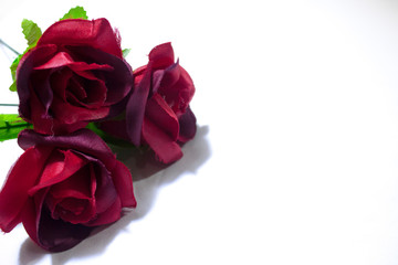 Happy Valentine day with red roses on white background photoshoot