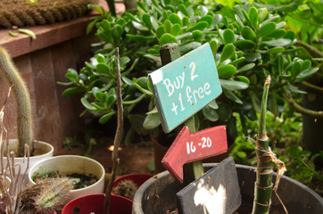 Buy one get two free arow sign in the flower shop