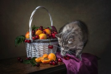 Still life with fruits  and curious kitty