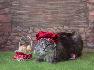 Charming kitty in the image of the Red Riding Hood