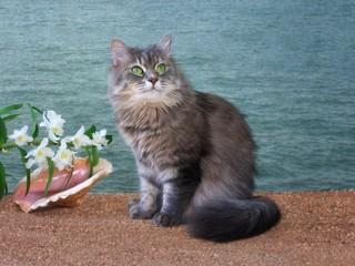 Pretty kitty  on the sea beach