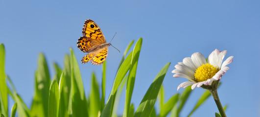 Banner mit Gänseblümchen und Schmetterling