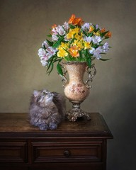 Still life with bouquet of multicolored Peruvian lily and curious kitty