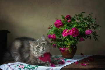 Still life with bouquet of magenta roses and funny kitty