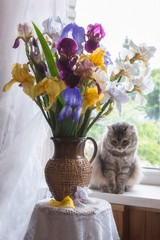 Still life with bouquet of multicolored irises and curious kitty