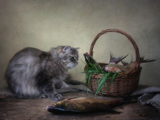 Still life with fish and curious kitty