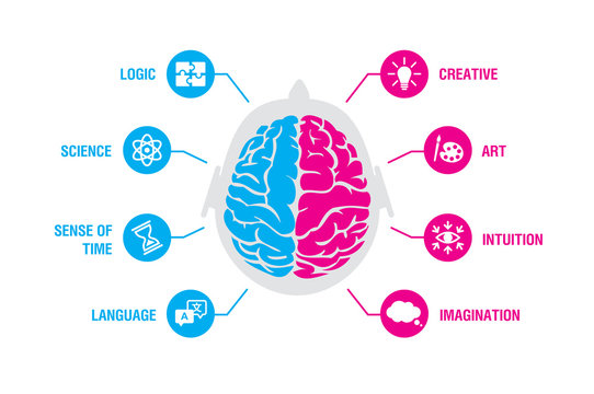 Left and right human brain concept. Logic and creative hemispheres infographics with brain and icons of science, sense of time, language, creative, art, intuition, imagination, vector illustration