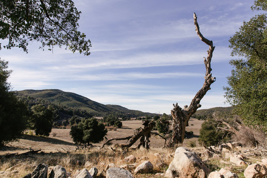 Dead tree in Cuyamaca Rancho State Park in California.
