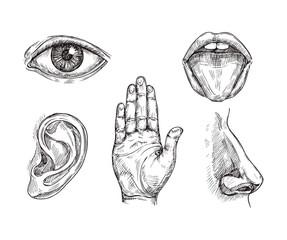 Sense organs. Hand drawn mouth and tongue, eye, nose, ear and hand palm. Engraving five senses vector illustration. Hear and sense, taste and see, listening sensor