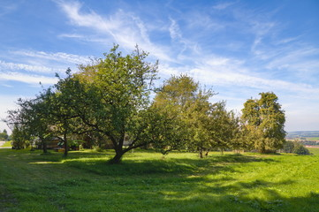 Apple trees in Bavaria with a blue cloudy sky
