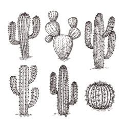 Sketch cactus. Hand drawn desert cactuses. Vintage engraving western mexican plants vector set. Desert cactus collection, engraving tropical cacti illustration