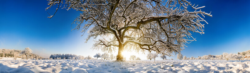 Magnificent panoramic winter scenery with a large tree in snow