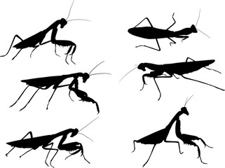 six mantids black silhouettes isolated on white