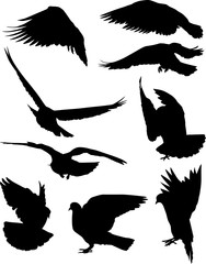 nine isolated black doves silhouettes