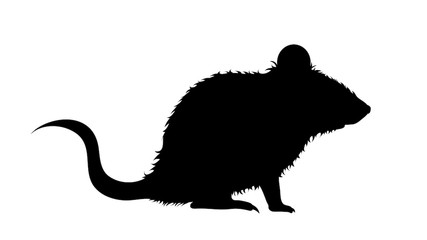 Vector silhouette of mouse on white background.