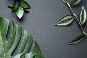 Wall Mural - Fresh tropical leaves on grey background