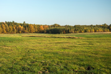 Big green meadow, autumn forest and clear sky