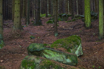 Stones and trees in the Bavarian forest