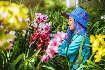 worker gardener is taking care of the orchid flower in garden. Agriculture, orchid Plantation cultivation. Cymbidium Orchid