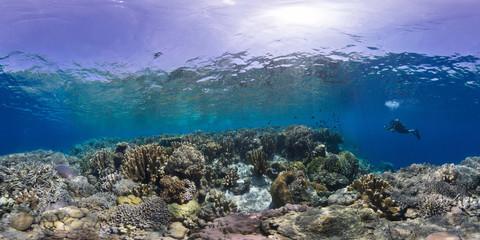 Coral reef Manado Indonesia