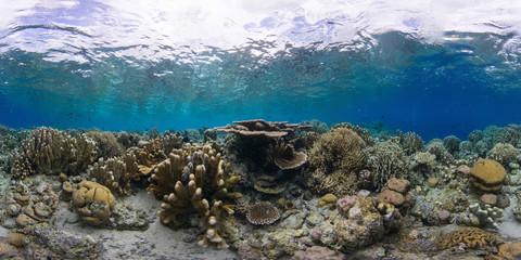Keuken foto achterwand Koraalriffen Coral reef Manado Indonesia