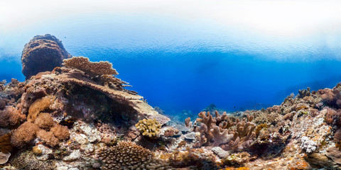 Healthy coral reef panorama