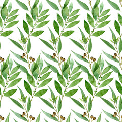 Seamless pattern of watercolor eucalyptus, fern and bay on white background
