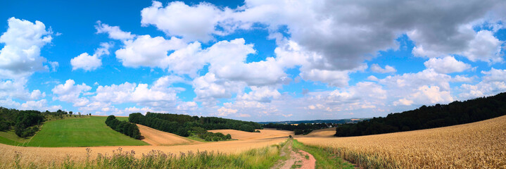 Panorama of summer field and dirty road