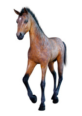 3D Rendering Horse Foal on White