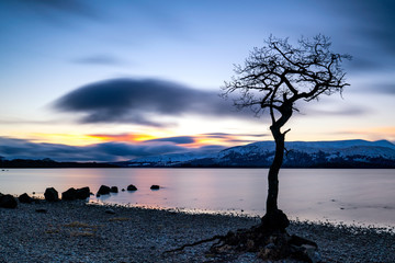 One Tree by a Scottish Loch