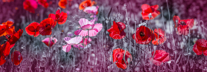 summer meadow with red poppies Wall mural