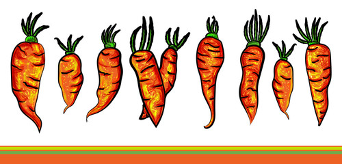 Carrots set with green tops. Cartoon set illustration on white background and a stripes. Color vector sketch of fresh carrot illustration. Vector illustration. - Vector