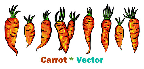 Carrots set with green tops. Cartoon set illustration on white background. Color vector sketch of fresh carrot illustration. Vector illustration. - Vector