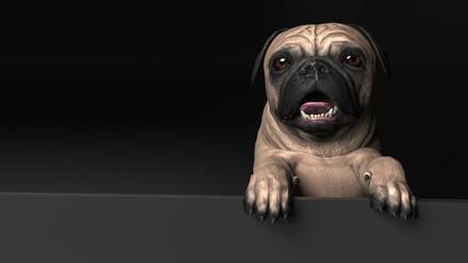 Cute pug dog behingdcard board open mouth posing 3d illustration