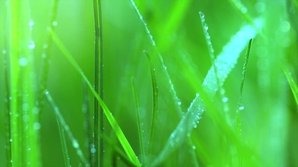 Fotoväggar - Grass with dew drops. Blurred growing grass background with water drops closeup. Slow motion 4K UHD video 3840X2160