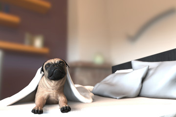 Pug dog in bed under the quilt next to pillows 3d illustration