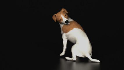 Jack russel terrier looking back in black background 3d illustration