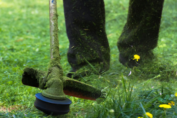 crazy grass cutting in the park with gasoline trimmer. head with nylon line cutting grass and dandelions in to small pieces. flying plant lumps. beautiful gardening background