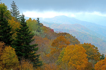 In fall colors, top of the Smoky Mountains on a foggy morning.