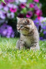 Kätzchen sitzt im Garten
