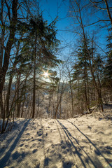 sun rising in heavy snow covered forest