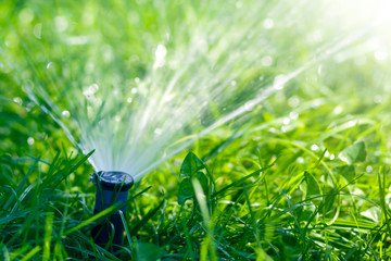 Lawn water sprinkler spraying water over lawn green fresh grass in garden or backyard on hot summer day. Automatic watering equipment, lawn maintenance, gardening and tools concept. Wall mural