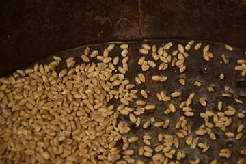 Wheat on burlap background