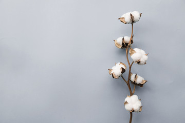 Cotton flower on pastel pale gray paper background, overhead. Minimalism flat lay composition for bloggers, artists, social media, magazines. Copyspace, horizontal Fototapete